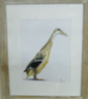 Roy Duck 1.JPG