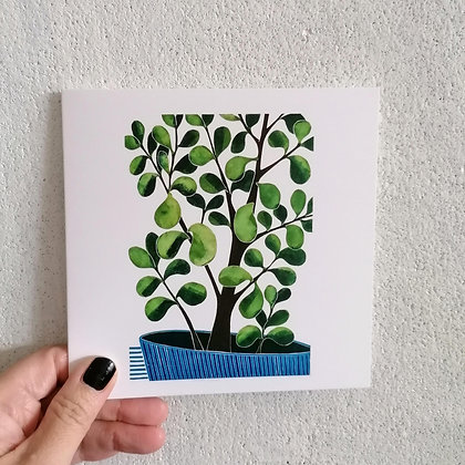 Crassula Argentea card