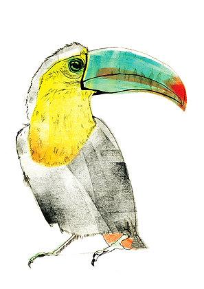A4 Toucan Print
