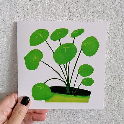 Pilea Peperomiodies card