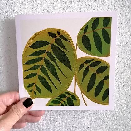 Peacock Plant card