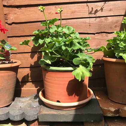 Green Rimmed Terracotta Pot