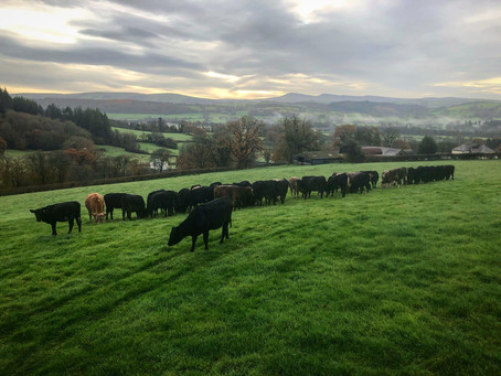 British Farming - The Sustainable Solution