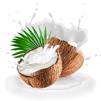 —Pngtree—simple_cartoon_coconut_deco