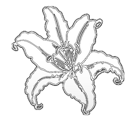 WHITFLOWER.png