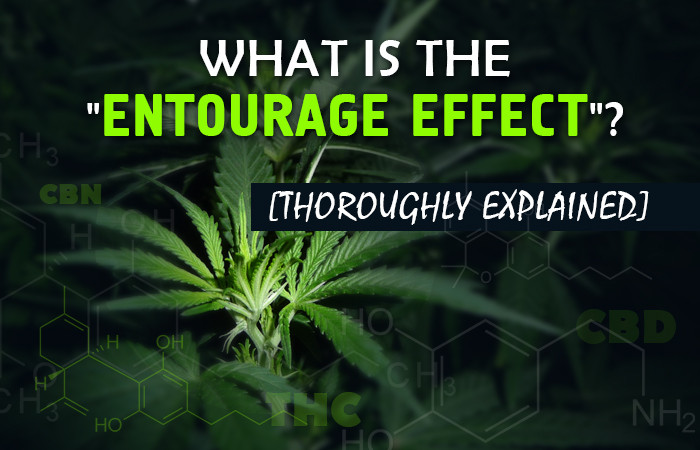 Marijuana, Cannabis, Entourage Effect, Synergistically