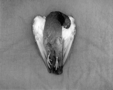 Bird 13