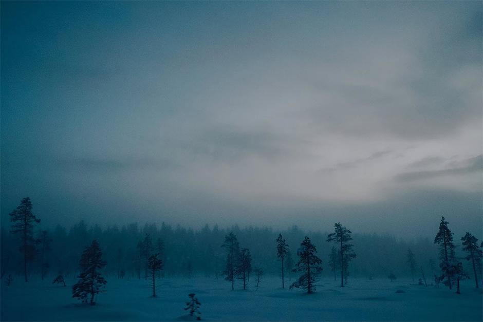 dark snowed winter forest in mist