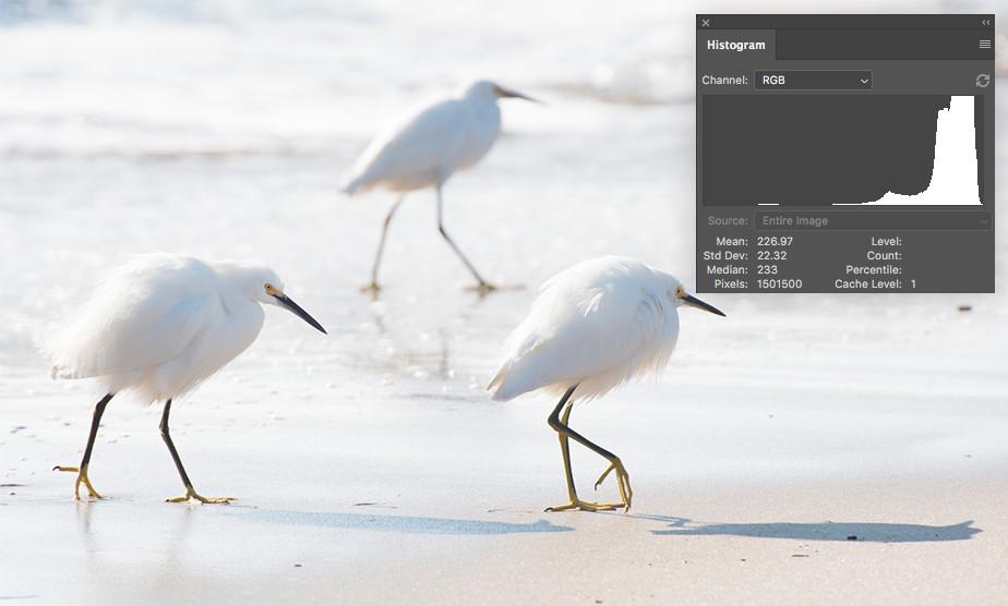 high-key photography histogram