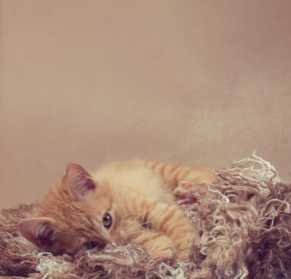 orange kitten laying on a rug