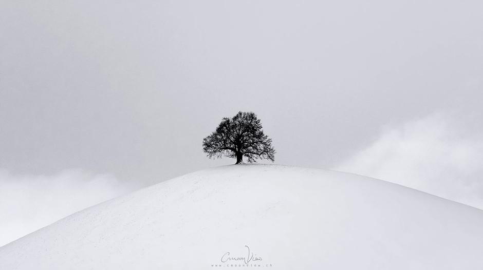 minimalist tree on top of hill