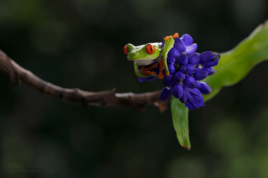 small green frog with red eyes sitting on a flower