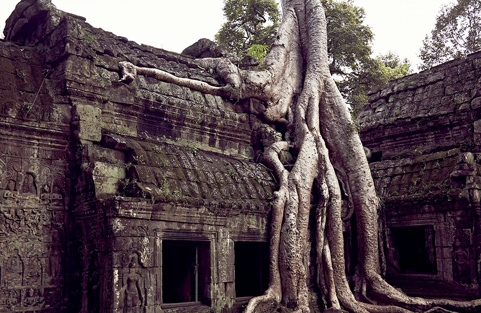 cambodia tree growing over ancient building