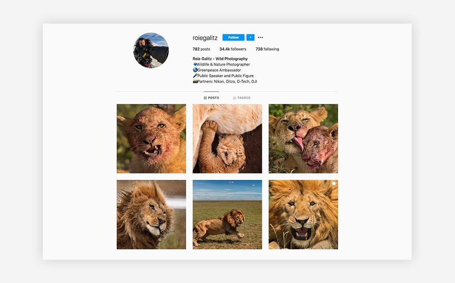 Roie Galitz nature and wildlife photographer Instagram feed