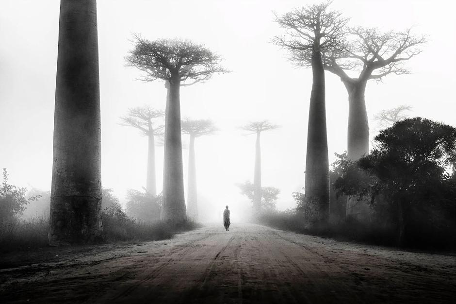 girl walking among baobabs in the mist