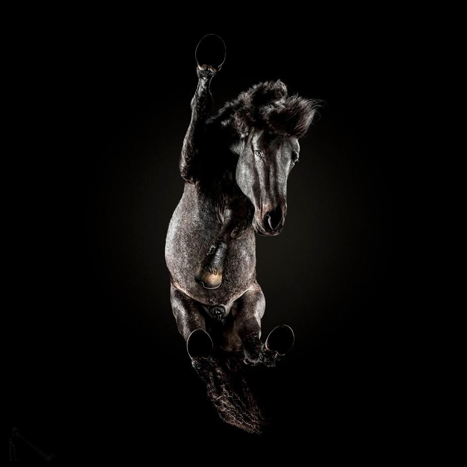 dark horse seen from below