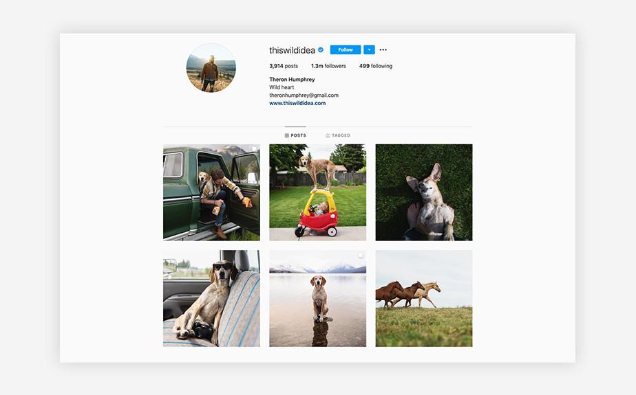 Theron Humphrey dog photography instagram account