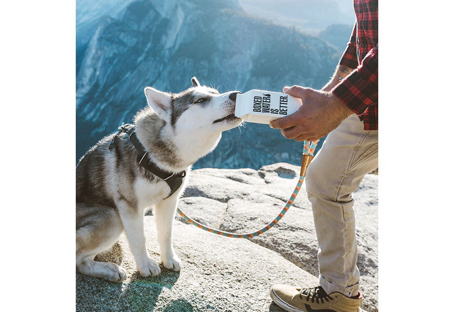 photography trends 2020 lifestyle photography husky drinking from boxed water