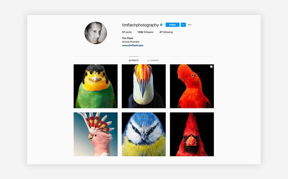 Tim Flach wildlife portrait photography Instagram account