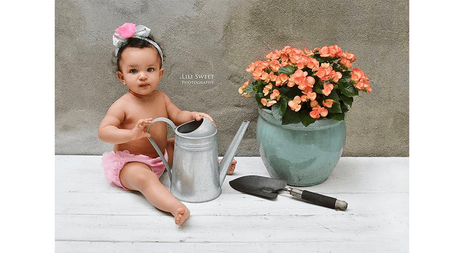 Lily_sweet_-_gardening