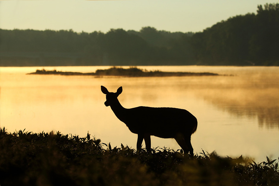 deer silhouette at lake on sunset