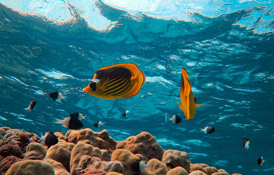 underwater fish advancing and receding colors in photography