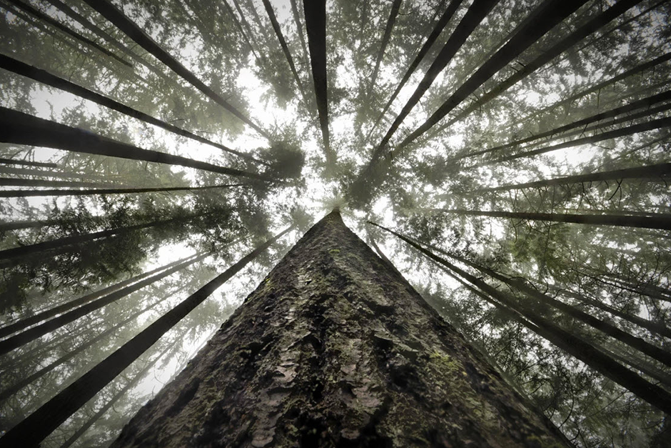 forest trees seen from below