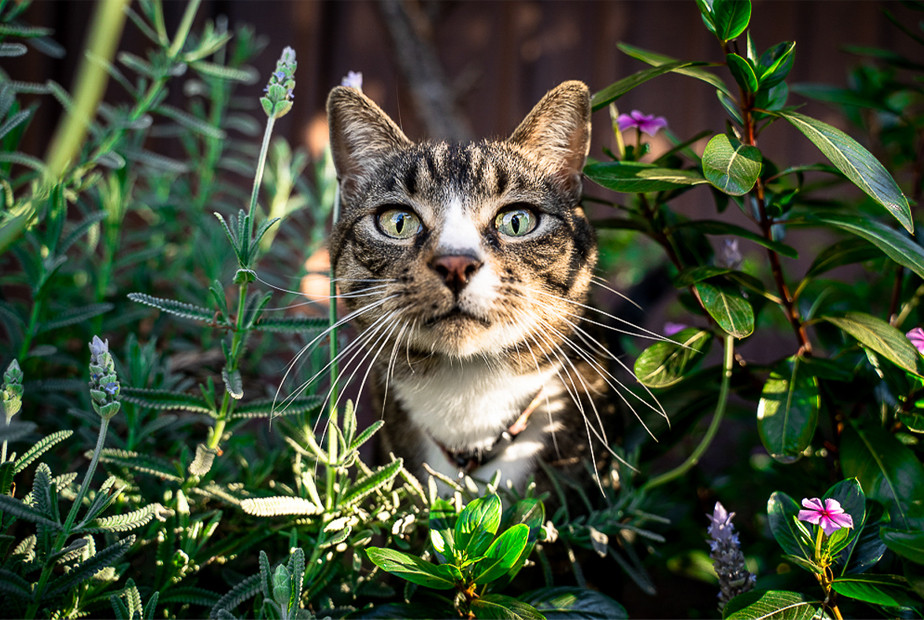 colorful pet picture of cat standing behind flowers