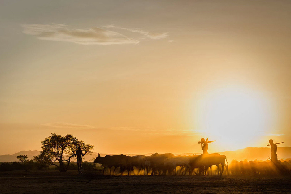 silhouette of longhorn cows walking at sunset guarded by two soldiers