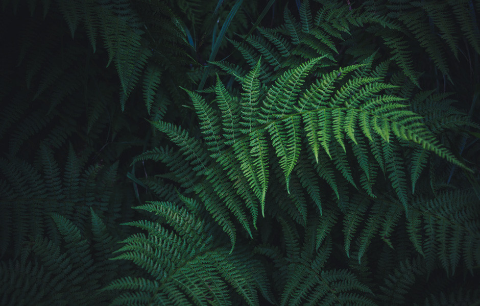monochrome photography color scheme dark green fern leaves
