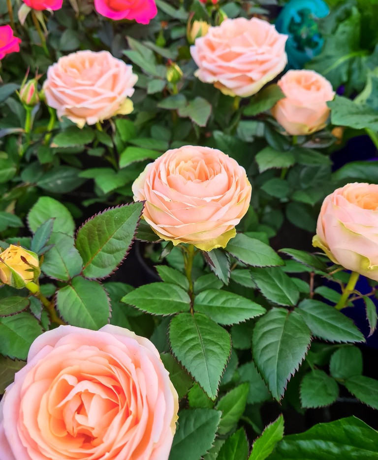 Blumen Luger | Grein | Österreich | Blumenladen | Gärtnerei