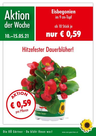 Blumen Luger | Grein | Österreich | Blumenladen | Gärtnerei | Wochenaktion