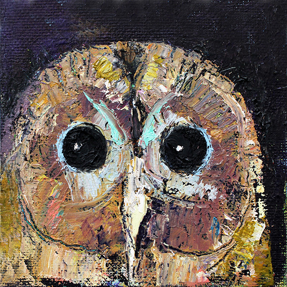 Little Owl - Oil on Canvas              15 x 15cm         SOLD