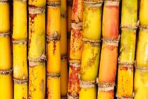 Sugar-Cane.png