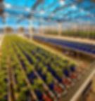 auto+greenhouse+crop.jpg