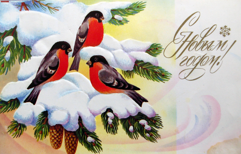 Открытка со снегирями новый год, поздравлением юбилей