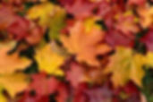 fall-leaves-400x267.jpg