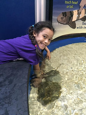 School age girl touching a stingray during summer camp field trip at the Florida Aquarium!