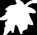 hoh leaf.png