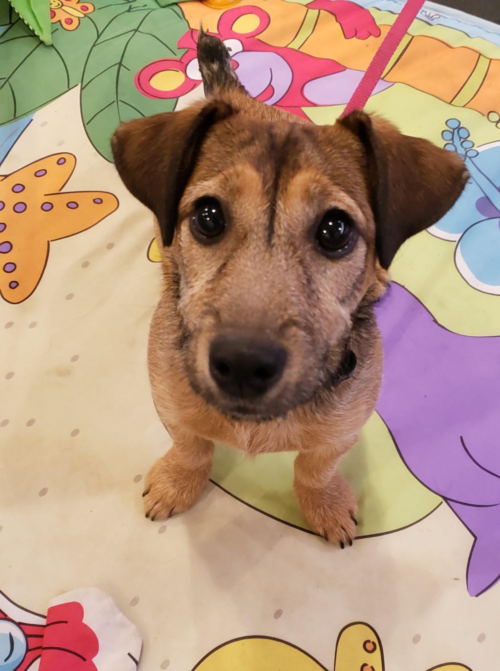 Puppy 1 - MONDAY Class