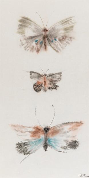 Butterflies of Fantasy No.2