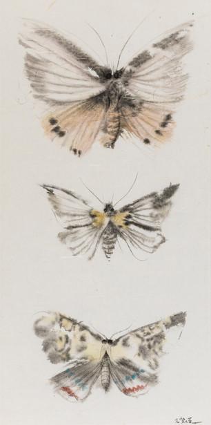 Butterflies of Fantasy No.3