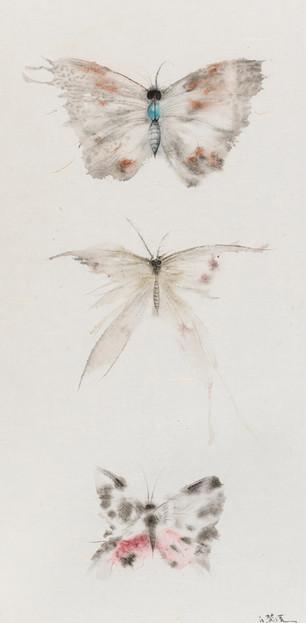 Butterflies of Fantasy No.1