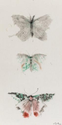 Butterflies of Fantasy No.4