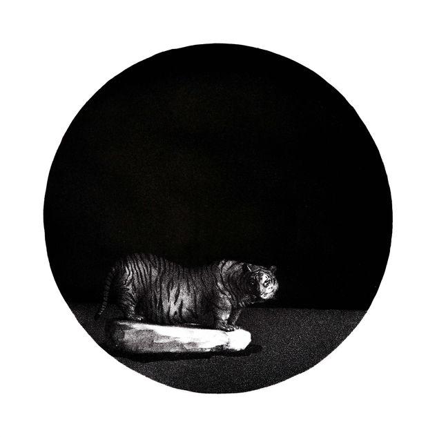 The Mirror of History · Big Tiger