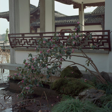 Trace of flowers, Hangzhou, China, 2013, from the series Soft Thorn.