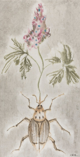 Winter-Insect, Summer-Herb No.7