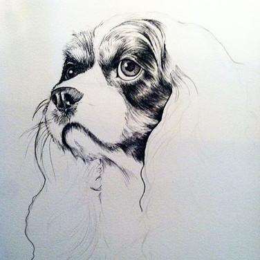 Ollie B. - Ink