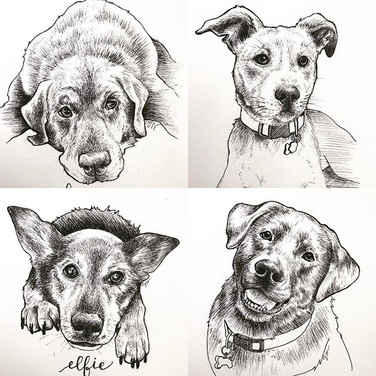 Top (left to right): Daisy, Leo Bottom (left to right): Elfie, Brewser Ink.