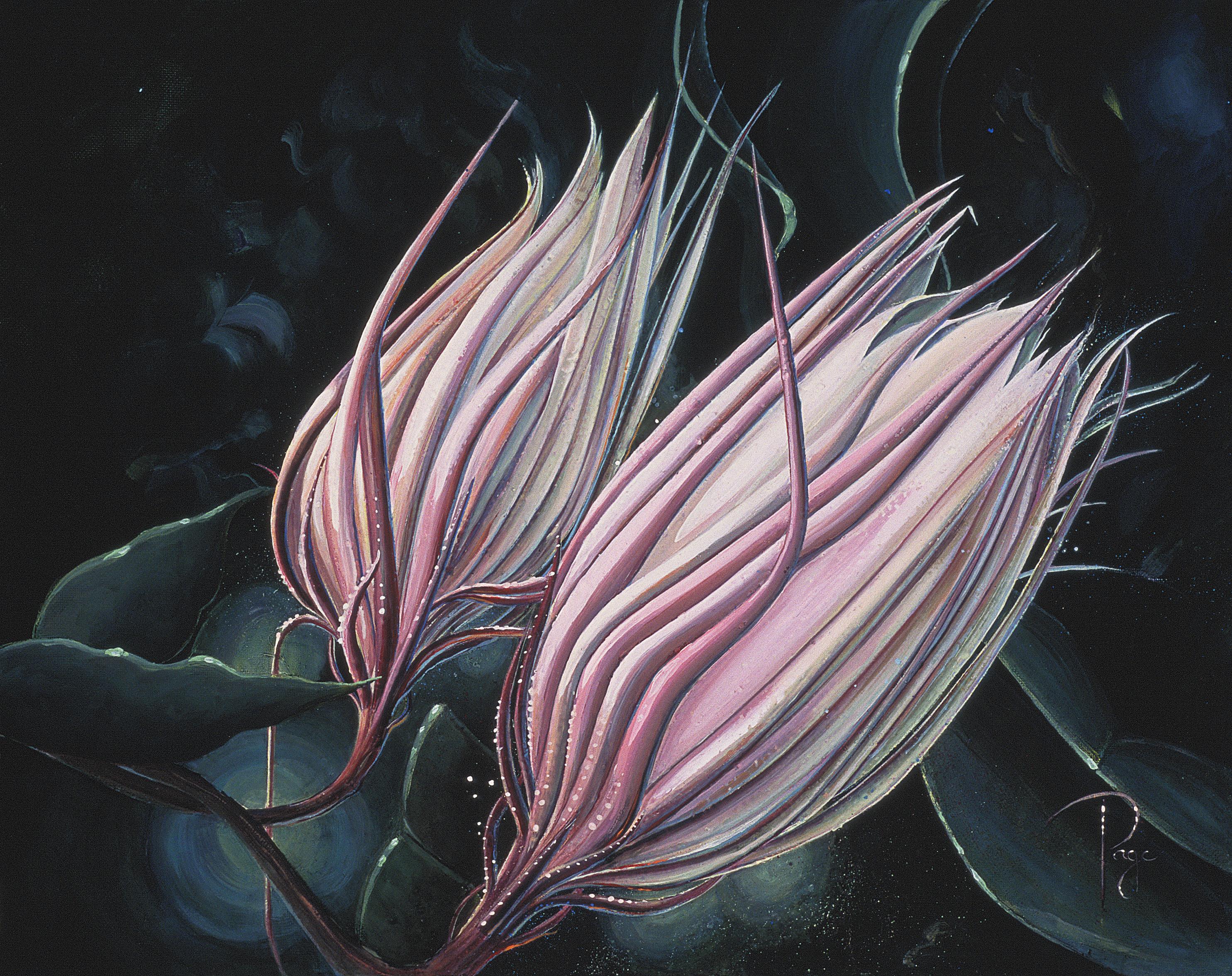 Pink Cirrus